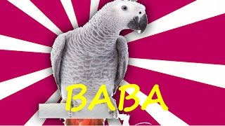 Papağan Ve Muhabbet Kuşu Konuşma Eğitimi Baba Sesi Hazır Ses Kaydı 1 Saat