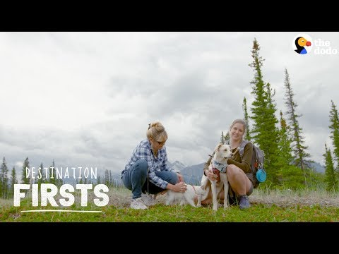 rescue-dog-takes-her-cat-sibling-on-an-adventure-l-the-dodo-destination:-firsts