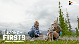 Rescue Dog Takes Her Cat Sibling on an Adventure l The Dodo Destination: Firsts
