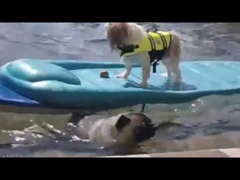 Самые прикольные собаки в мире  Смешные собаки и щенки видео
