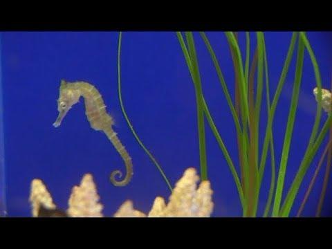 Birch Aquarium, La Jolla, CA