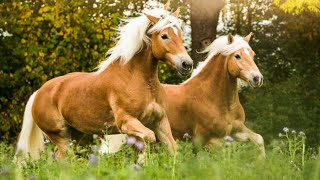 Horse SOO Cute! Cute And funny horse Videos Compilation cute moment #13