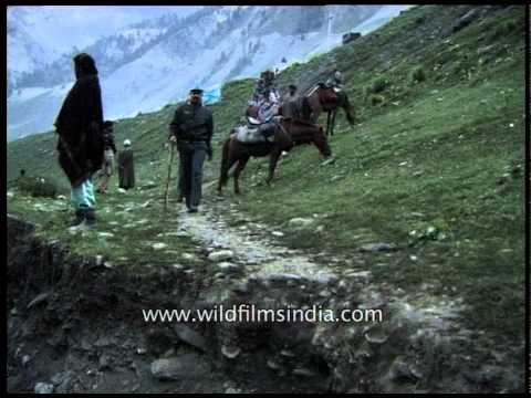 Amarnath yatris ride on ponies to reach the holy cave of Lord shiva