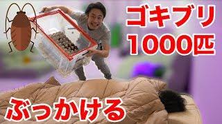 【閲覧注意】寝起きにゴキブリ1000匹降ってくるドッキリの反応が面白かったwww