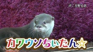 CHI-TAN☆ the otter goes! Discover real Japan〜カワウソちぃたん☆が行くホントの日本 第14回〜
