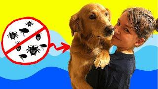 How to give your dog a flea bath!  Dog Bathing tips