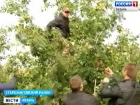 В Рязанской области возрождают яблоневые сады