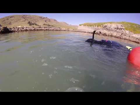 Lyttelton Dive - Fathers Day 2019