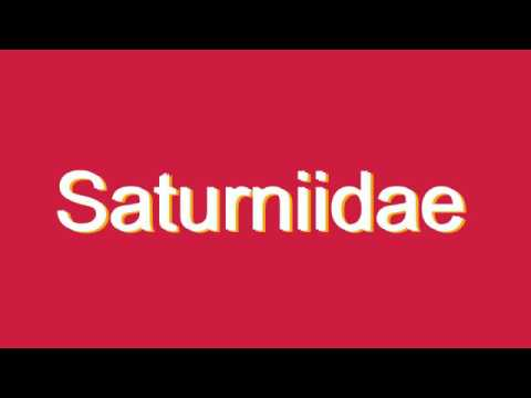 How to Pronounce Saturniidae