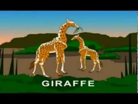 BÀI 2:  Bé học Tiếng Anh qua các con vật (Children learn English through the animals)
