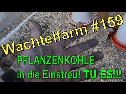 Wachtel-Einstreu mit Pflanzenkohle - Deep-Litter-Methode - Wachtelfarm #159