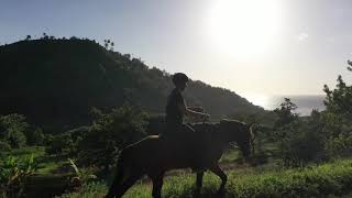 The Richmond Valley Trail - Horse Riding Caribbean.