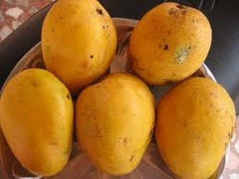 Image result for safeda mango