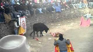 corrida de toros 2010 octubre distrito caylloma-gato
