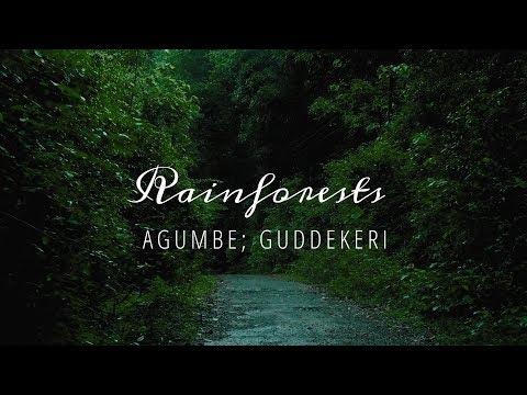 Rainforests - Agumbe, Guddekeri - Karnataka