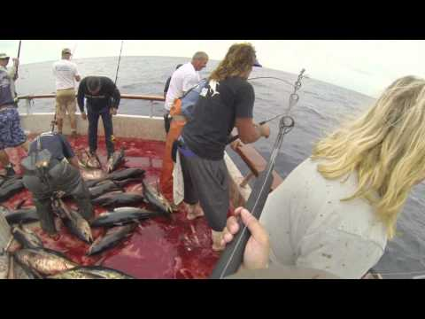 Independence Sportfishing - 7 day - Sept 14-21,2013  FULL VIDEO