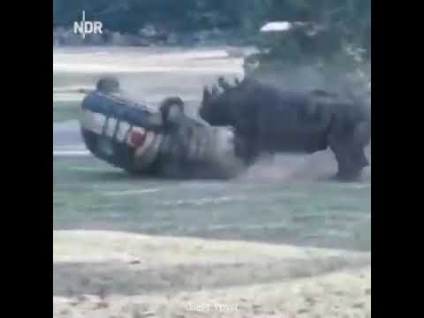 Rhino destroying a car completely