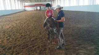 Уроки верховой езды для детей #лошадь#пони#верховаяезда#длядетей#верховая езда для детей#ипподром