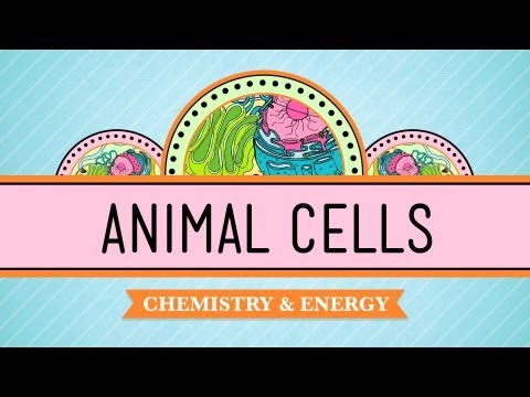 Eukaryopolis - The City of Animal Cells: Crash Course Biology #4