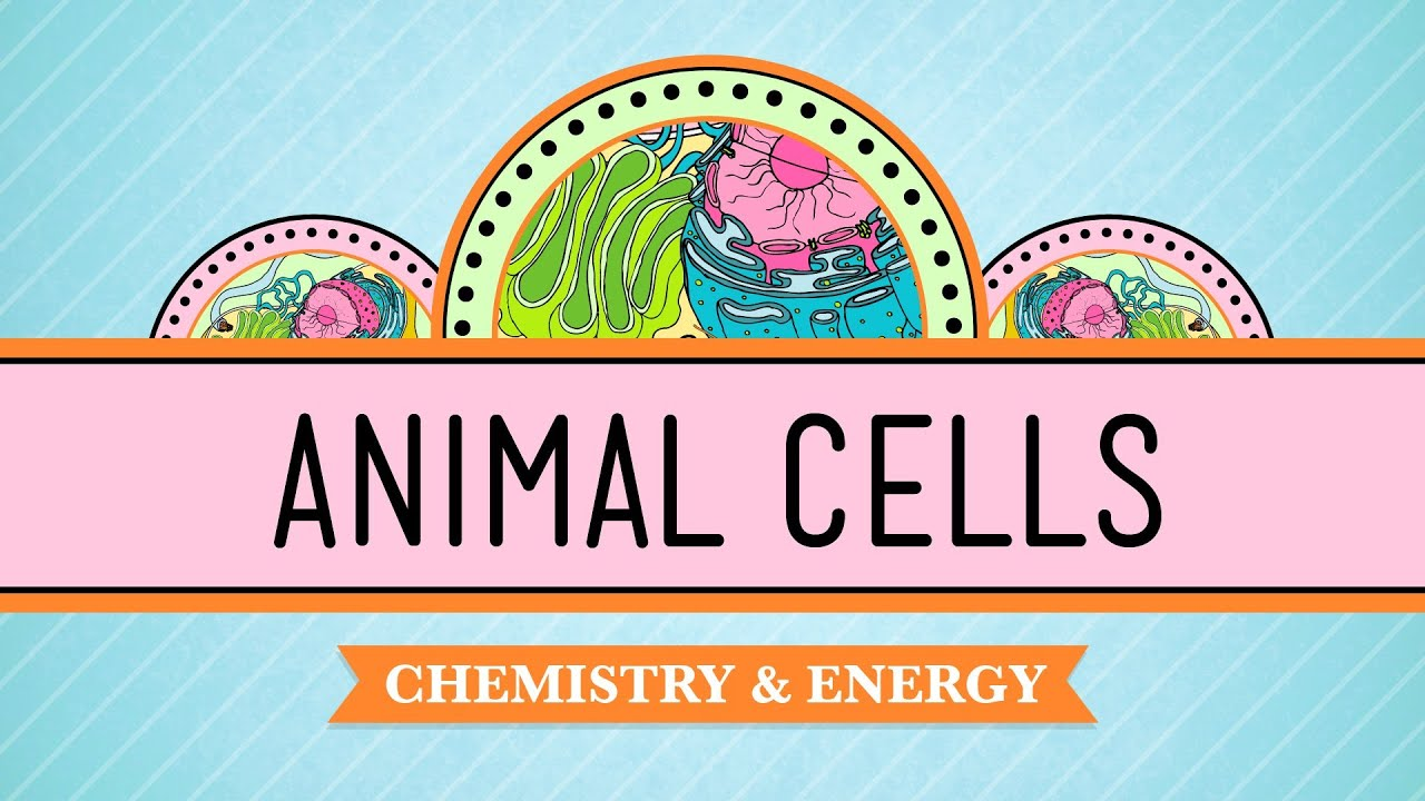 hight resolution of Eukaryopolis - The City of Animal Cells: Crash Course Biology #4 - YouTube