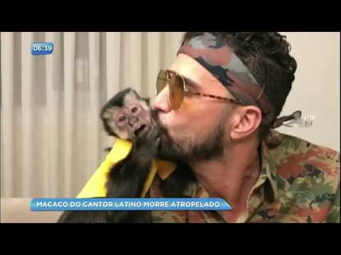 Macaco do cantor Latino morre atropelado