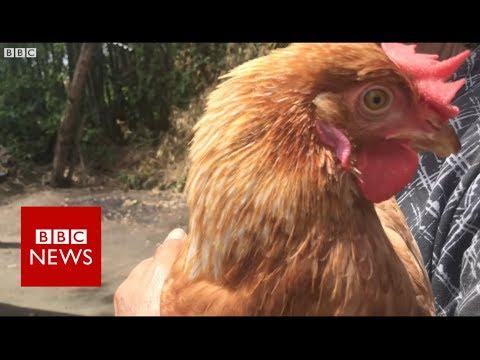 Thailand's Disease Detectives - BBC News