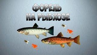 Русская рыбалка 3.9 — Ловля угря на карму
