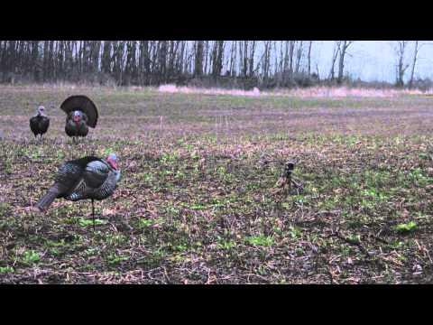 Michigan Turkey Hunt 2015 (early Season)