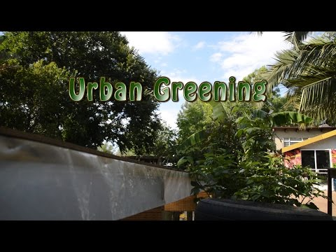 Urban Greening in Johannesburg