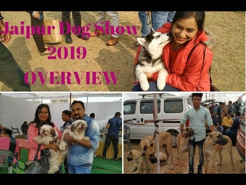Jaipur Dog Show 2019 - Overview