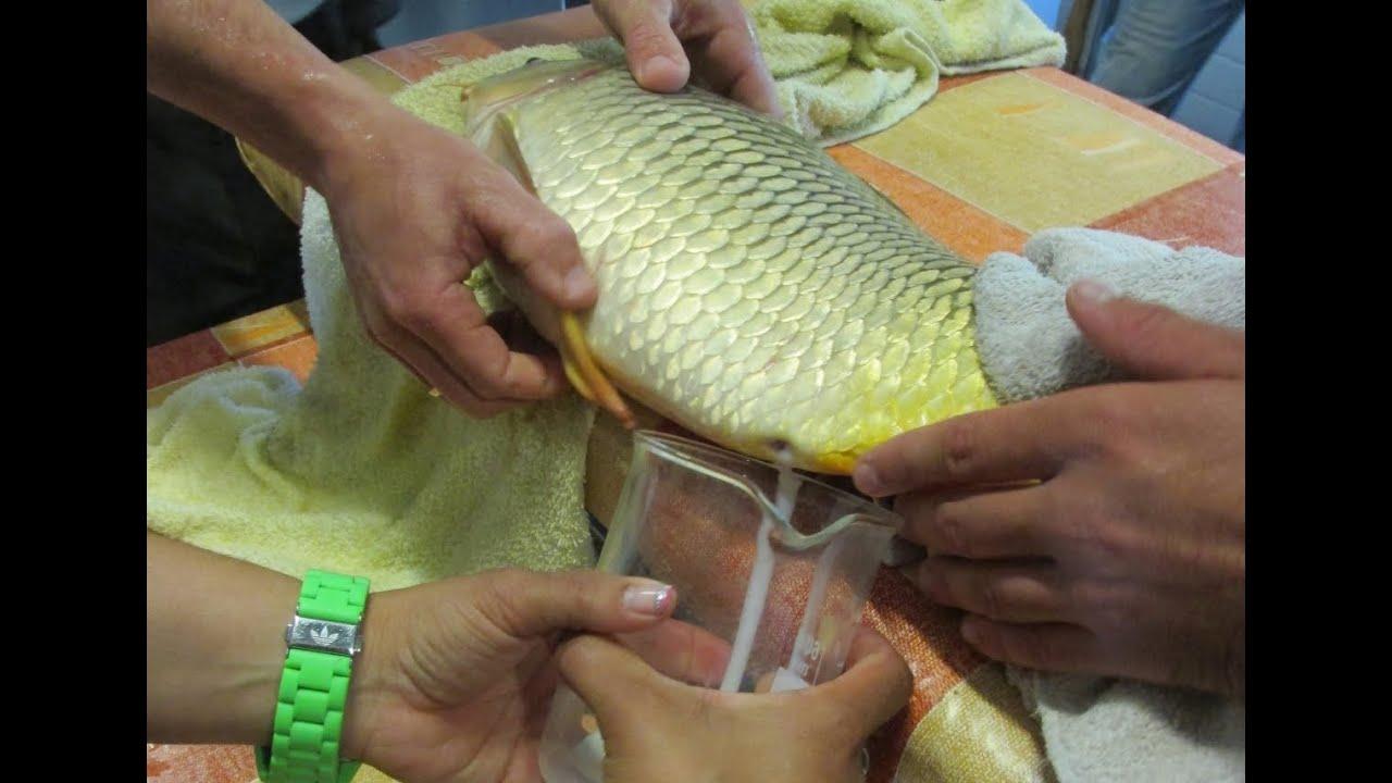 halparaziták fotó és leírás