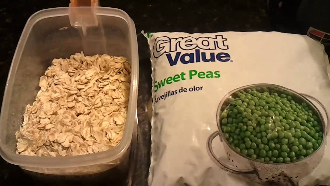 Goldfish food gel food recipe for goldfish youtube forumfinder Image collections