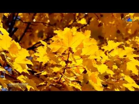 les feuilles mortes (autumn leaves) скачать. Слушать Ernesto Cortazar - Les Feuilles Mortes (Autumn Leaves) оригинал
