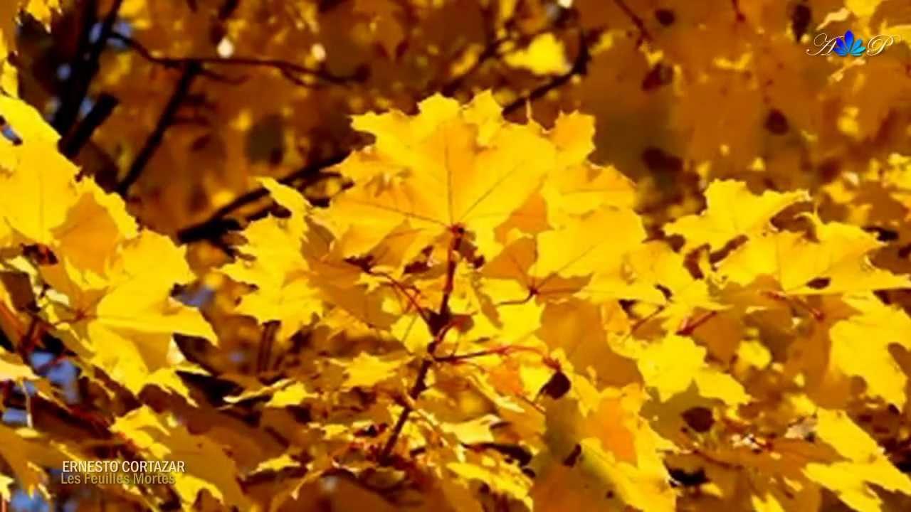 ernesto cortazar les feuilles mortes autumn leaves. Black Bedroom Furniture Sets. Home Design Ideas