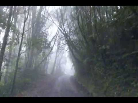 Morning Mist >> Mossy Forest, Cameron Highlands - YouTube
