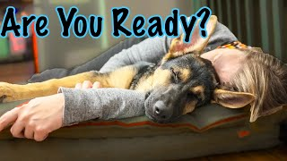 How to Know if You're Ready for a German Shepherd!