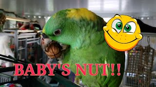 Baby and Puffy Love Walnuts!