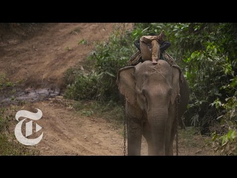 Myanmar's Unemployed Elephants | The New York Times