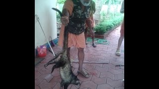 COMMON PALM CIVET(TODDY CAT) CAUGHT BY SNAKE CATCHERS IN KERALA