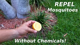 Repel Mosquitoes & Sandflies NATURALLY!