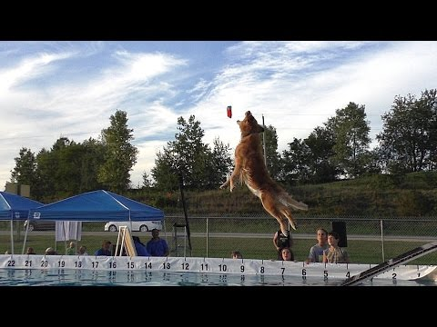 Canine Dock Jumping In Slow Motion