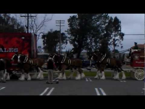 Budweiser Clydesdales on Marine Corps Base Camp Pendleton, CA