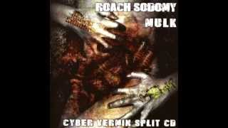 Roach Sodomy - Insecticide Use Bring Us Roach Abuse