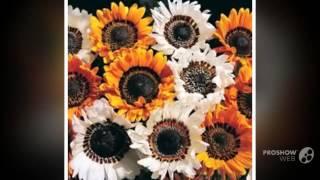 видео Венидиум: выращивание из семян, посадка, уход