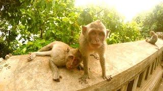 Australien VLOG #28 Bali Adventure Teil 1 - Affenangriff!