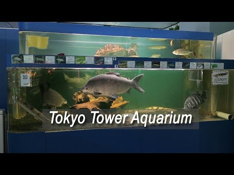 The WORST public aquarium I've been to - Tokyo Tower Aquariu