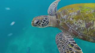 สุดขอบฟ้า ท้าเที่ยวไทย EP.13 : มหัศจรรย์โลกสีคราม...หมู่เกาะสิมิลัน จ.พังงา