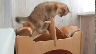 Котята не поделили домик! Драка в эфире!