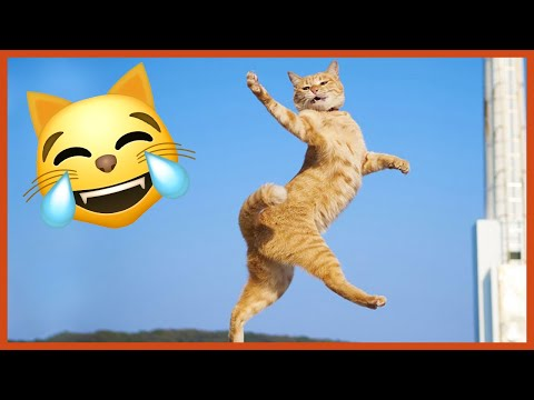 The Funniest Dancing Cat Pics