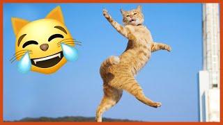 The Funniest Dancing Cat Pics